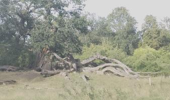 Durch den Wildpark nach Werder